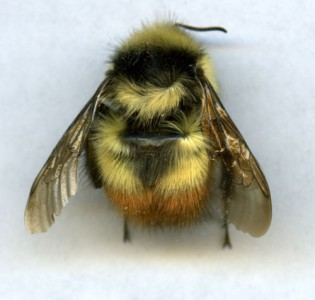 fleißige Bienchen sind am Werk…